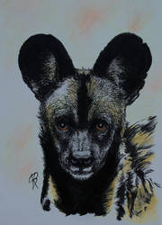 African Wild Dog Zooly Challenge 3 by GersifGalsana