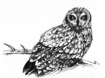 Owl - Inktober 2018 by GersifGalsana