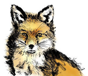 Fox - Inktober/Foxtober by GersifGalsana
