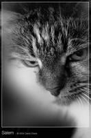 Salem by CIBS