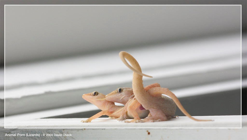 Animal Porn Lizards by CIBS