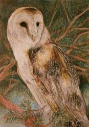 Barn Owl .ACEO by silverybeast