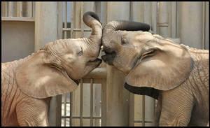 An Elephant Kiss by loveforRuka