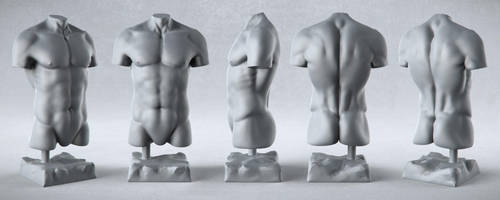 Male Anatomy Studies - Torso by PixelPirate