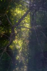 Dead Tree by MaryONE22