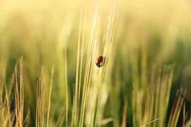 Ladybird by vladis123