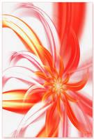 Transparent Flower by terforpova