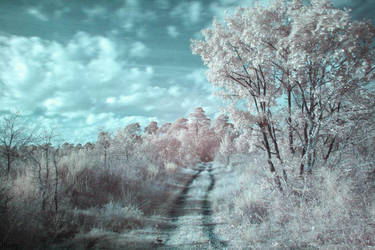 Infrared 2 by Octo-pus