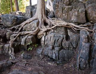 Haunted tree by Snoopee63