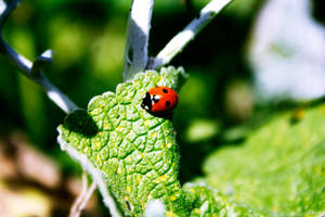 Ladybird by RecycledGenius