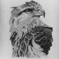 The Grey Eagle by paigebates