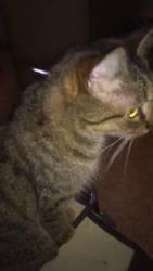 My Cat by BlazingLife97