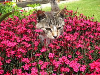 Cat In Flowers by ausrejurke