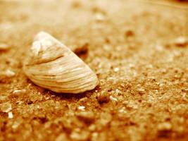 Seashel at the Shore by ausrejurke