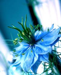 Heaven in a Wild Flower by ausrejurke