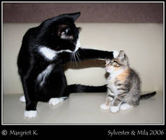 Sylvester and Mila by Daysleeper1982