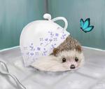 Blue China Hedgehog by hannxm