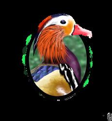 Mandarin Duck by hannxm