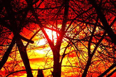 Oak Forest Sunset 001 by UncleMonkey777