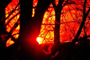 Oak Forest Sunset 002 by UncleMonkey777