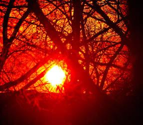 Oak Forest Sunset 003 by UncleMonkey777