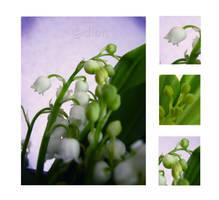 lily by dionn-k