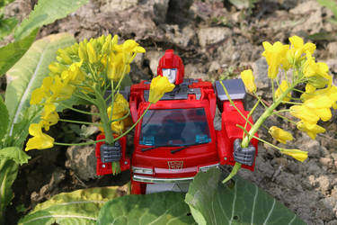 Ironhide like Rape Flower by manbu1977