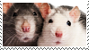 rat stamp by catstam