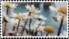 daisy stamp by catstam