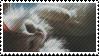 Fluff Cat by catstam