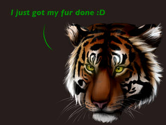 Salon Tiger by DragonsPainter
