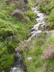Stream trickling past heather by Itsybitsykitsy
