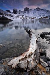 Dead tree on Allos Lake by XavierJamonet