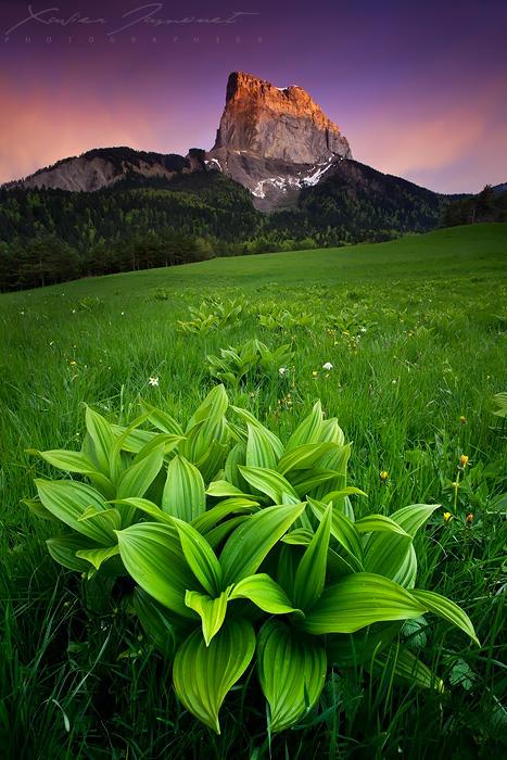 Alpenglow over Mount Aiguille by XavierJamonet