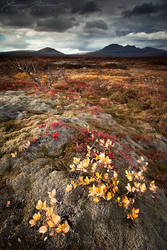 Colors at Thingvellir by XavierJamonet