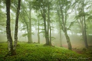 Misty Forest by XavierJamonet