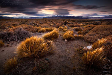 Pampa by XavierJamonet