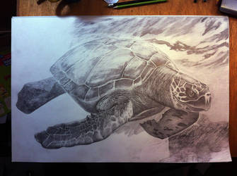 My turtle :) Work in progress by zen-emma