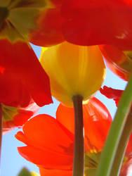 tulips4 by enternojik