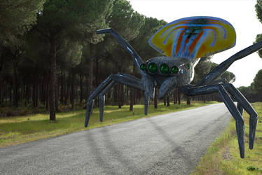 Maratus Volans 3D Giant Peacock Spider by IvanHubo