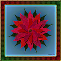 20161202-Poinsettia-P001-v9 by quasihedron