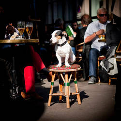 Dog at St Germain by TheCorry