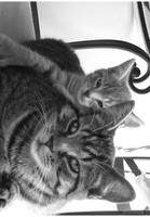 Lazy Days by Aoxa-Cats