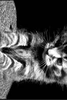 Playful Innocence by Aoxa-Cats