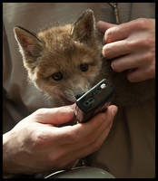 Phone Fox by Skia