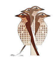 Thrush by Skia