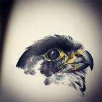 Peregrine Falcon by Skia