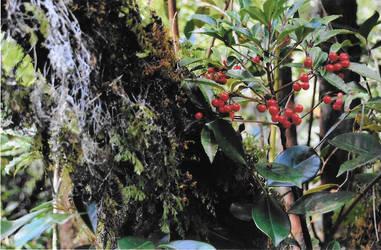 vegetation ile de la reunion by poluxtartanpion