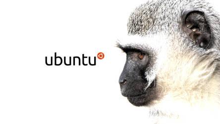 Vervet Monkey by Tom6678