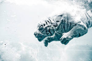 Odin the diving tiger by Joeykunin